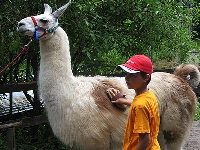 Durch die Fellpflege bauten die Kinder die Angst vor den Tieren ab.