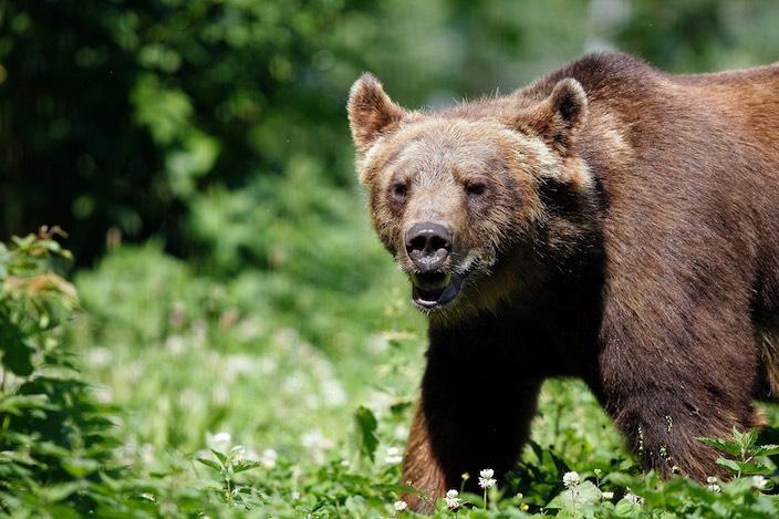Am Wochenende beobachteten mehrere Personen bei der Beatenbucht einen Bären.