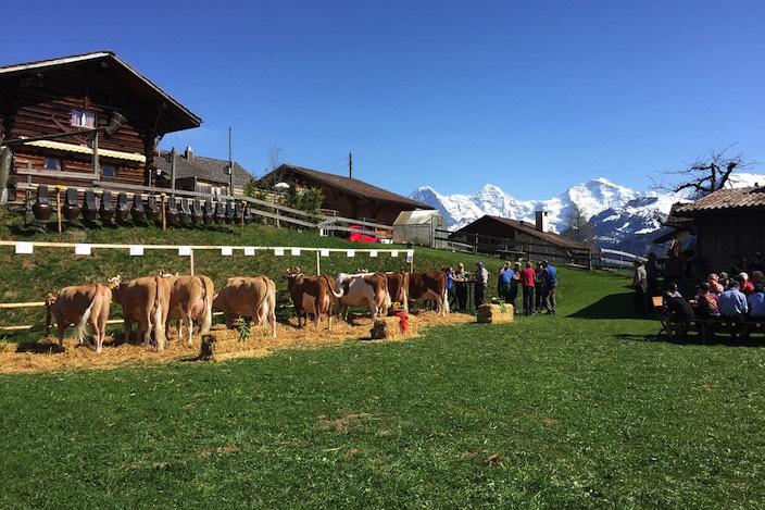 Zwei Kuhfamilien von Familie Aebersold wurden von Swissherdbook bewertet.